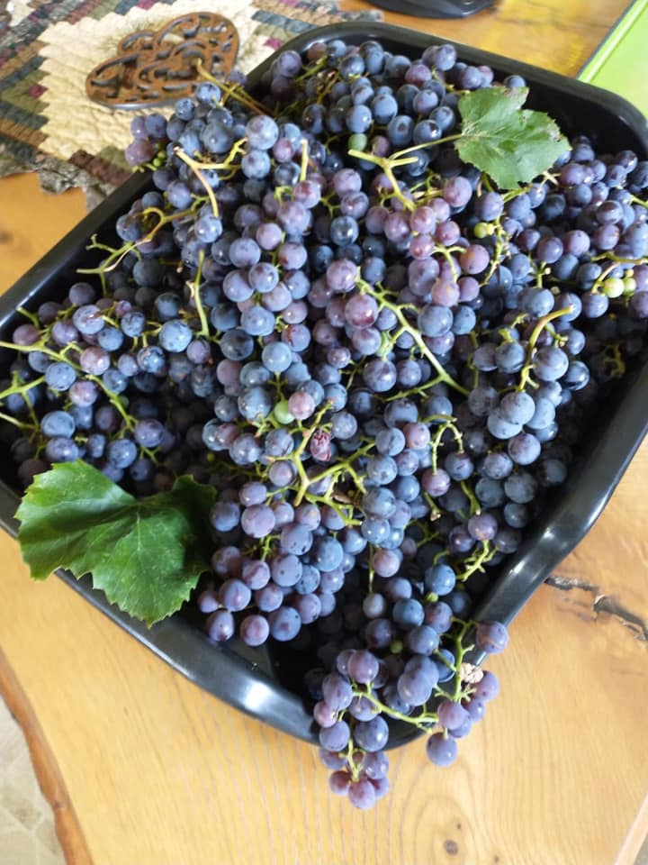 Grapes and other fresh organic local produce in Menominee, MI at Raven Wood Gardens LLC