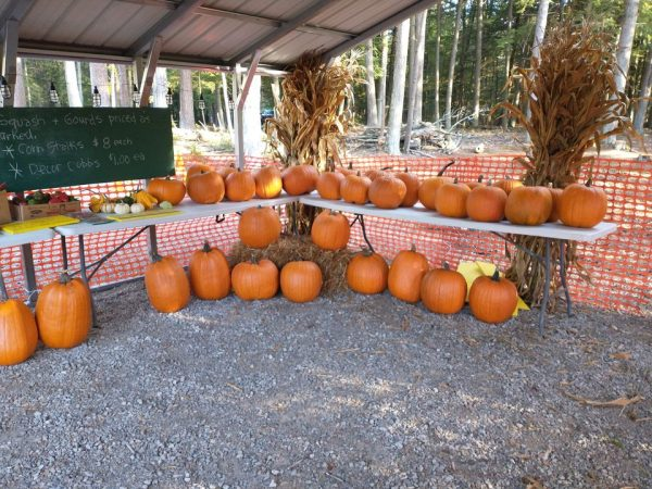 Organic Pumpkins, Squash, and Gourds For Sale at Raven Wood Gardens in Menominee, MI